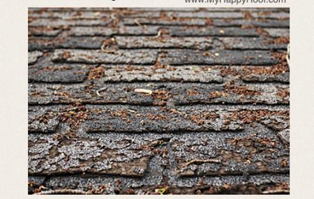 shingles repair roofing companies colorado springs